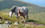 konie na polanie